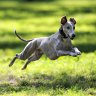 More than 20 new parks and off-leash dog areas revealed