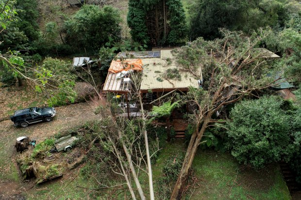 John Carlyle's Kalorama home which he is still living in after five trees had crashed into it during last Wednesday's storm.