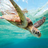 Russell Crowe shells out $50K to help Queensland turtles