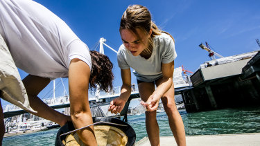 Seabin's technology filters water to collect marine litter.