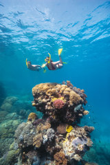 Climate change could make activities such as snorkelling or diving at the Great Barrier Reef less enjoyable.