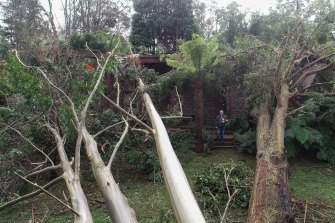 Trees did extensive damage to John Carlyle's home in Kalorama during the storm.