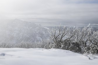 The Snowy Mountains ecosystem is fragile.