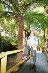 Exploring the giant tree ferns of Penance Grove.