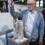 Purr-fect: All Breeds judge Ern Fuller with his British Shorthair at the Cat Lovers Show at the Royal Exhibition Buildings in Carlton.