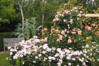 There are plenty of roses, both contemporary and classic favourites.