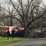 Woman killed by falling tree at Princes Park