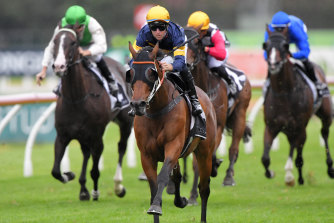Master Of Wine is a super stayer according to leading sectionals analyst Vince Accardi.