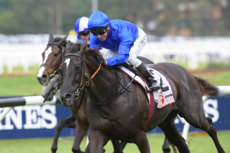 Avilius will look to defend his Tancred Stakes crown at Rosehill on Saturday.