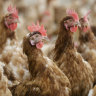 First human case of H10N3 bird flu in China