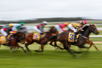 There are plenty of options for punters on an eight-race card at Kembla.