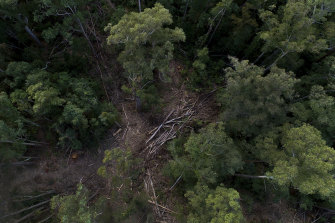 A drone image showing pockets of logged woodland within the Lower Bucca State Forest, another region of northern NSW where the EPA has been at odds with Forestry Corp operations.