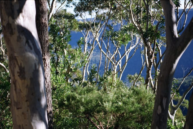 """""""The world will shrink as the damp creeps under the floorboards and swirls through the branches of the eucalypts and pines."""""""