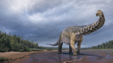 Australotitan cooperensis roamed the marshy shores of the inland sea of Australia in the late Cretaceous, 95 million years ago.