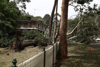 A fallen tree branch on Dumaresq Street in Gordon.