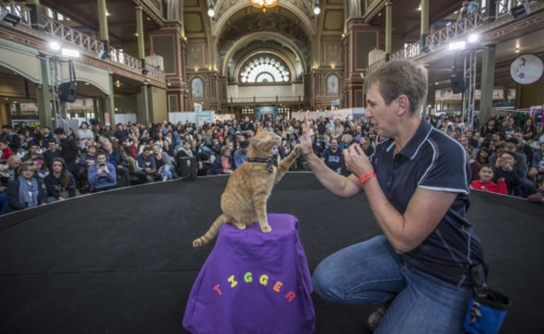 High five: Sunny the cat was the star of animal trainer Kelly Gill's Cat Lovers Show demo, showing that you can teach a cat tricks.