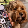 Matchmaking app is going to the dogs