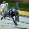 Greyhound Racing NSW announces record prizemoney increase