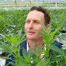 Queensland's first medicinal cannabis farm officially opens