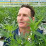 Queensland's first medicinal cannabis farm officially opens