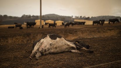Bega Cheese hit with fears over milk supply after fire devastation