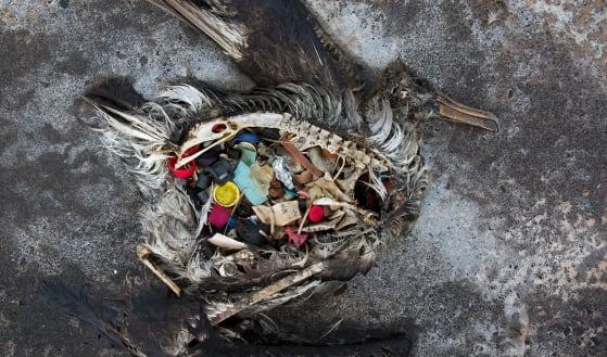 Marine parks decision risks making ocean tragedy even worse