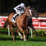 Speed machine Pippie wins Moir Stakes
