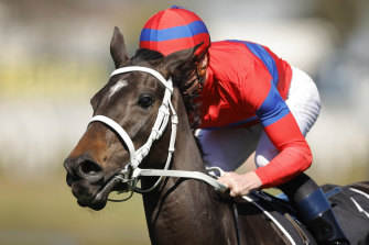 Verry Elleegant can further enhance her standing as the best horse in the country in an intriguing George Main Stakes.