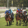 Taking a punt: Tuesday's meeting at Newcastle looms as one for the form students.