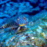 Massive marine parks declared in Australia's Indian Ocean Territories