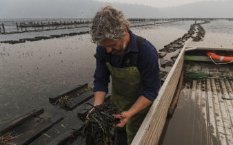 Greg Carton, owner of Broadwater Oysters in Pambula.