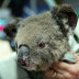 Stop sharing photos of singed koalas and ask leaders to meet targets
