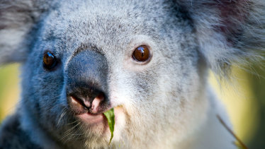 Brisbane City Council wants the state government to hand over southside koala habitat at a peppercorn rate.