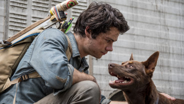 Surprise nomination for best visual effects: Dylan O'Brien and dog in Love and Monsters, which was shot in Queensland.