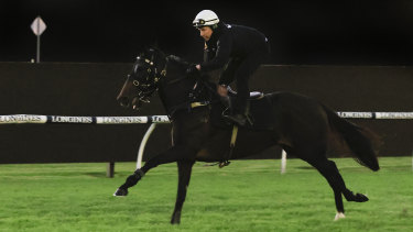 Verry Elleegant works in the morning before the Queen Elizabeth Stakes.