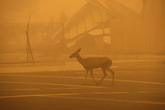 A deer is caught in the smoke from the the Dixie Fire.