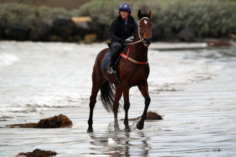 Kirsty Mcmahon giving Cats Fun an early morning run on Warrnambool beach back in 2014.