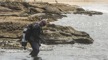 A diver enters the water at La Perouse on Saturday.