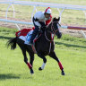Berry hails Cox Plate favourite 'best Japanese in Australia for years'