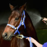 Clashes and clashing heads: How Aquanita has riven Victorian racing
