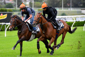 Addeybb (outside) and Young Rascal gallop at Canterbury on Tuesday.