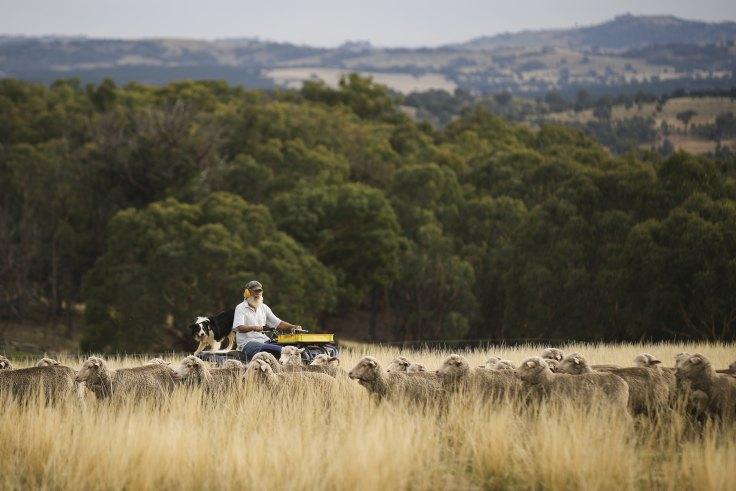 smh.com.au - Mike Foley - Coalition farm policy quietly grows climate plan alternative