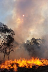 African lovegrass fire in winter. The weed extends the fire season.