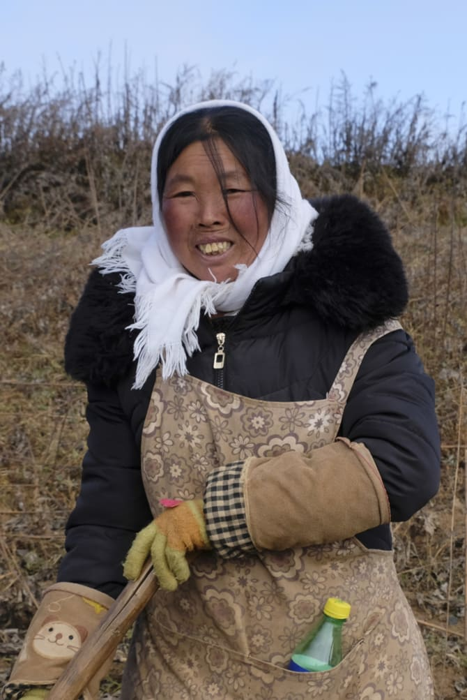 Chen Zimei, 50, is harvesting Jerusalem artichokes for $14 a day to put her son through university.