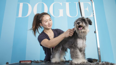 "Luxury dog care brand Dogue offer mud baths and aromatherapy for their four-legged ""clients""."