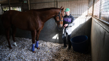 Trackwork rider Stuart Williams with Nature Strip  at home on cardboard in his stable at Rosehill.