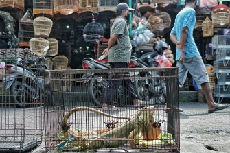 A live lizard is displayed for sale in a cage at the Satria market in Bali, Indonesia.