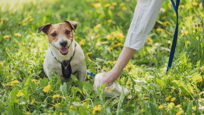 Why I went from doggie-doo denier to poop picker-upper