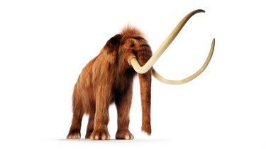 A woolly mammoth. Could its DNA be mixed with that of an Asian elephant to create a mammophant?