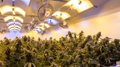 Major health insurer becomes first in Australia to support medical cannabis treatments